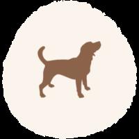Hundemarke_Größe_M