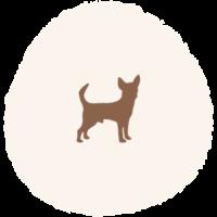 Hundemarke_Größe_S